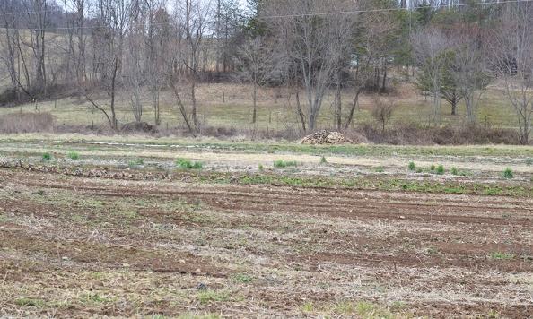 appalachia star farm field