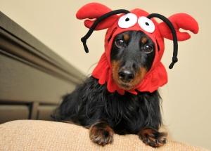 jetty rock lobster