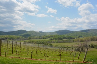 Cheers Check in: Monticello Wine Tour & Coach Co.